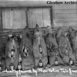 Methods of bootlegging: Confiscated pig carcasses stuffed with whiskey